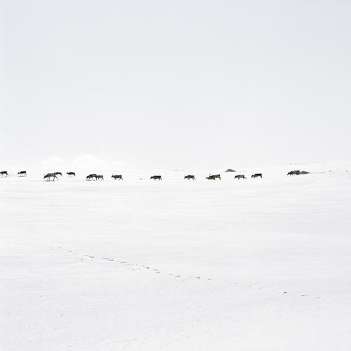 03-maze-sami-lapland